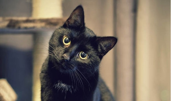 10 Popular Superstitions about Black Cats 5