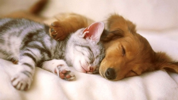 40 Cute Pet's Nap Time Pictures 18