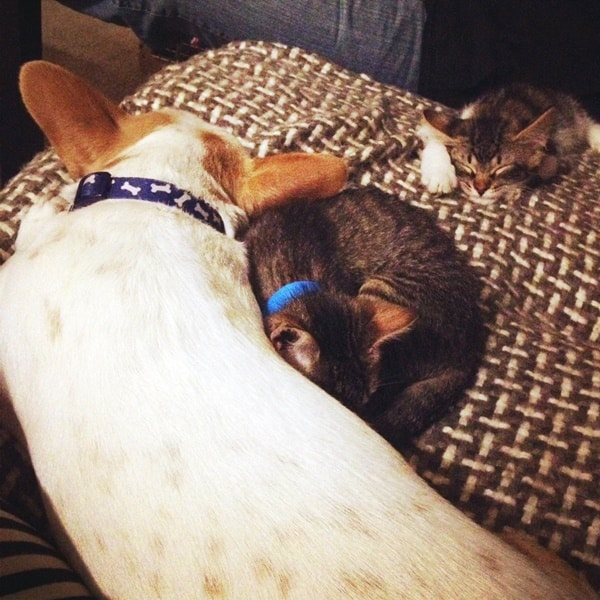 40 Cute Pet's Nap Time Pictures 2