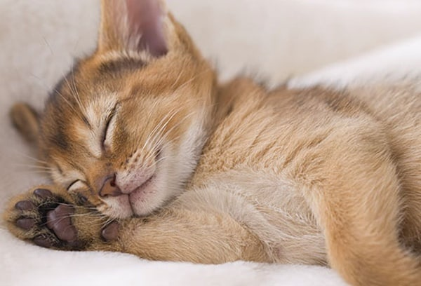 40 Cute Pet's Nap Time Pictures 35