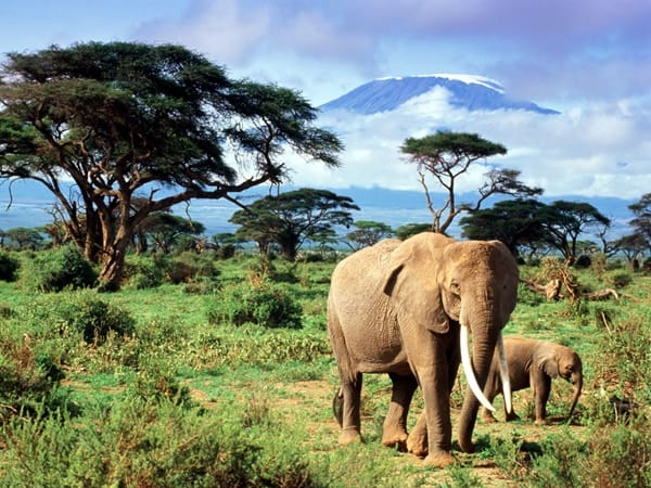 40 Outstanding Pictures of African Elephants 14