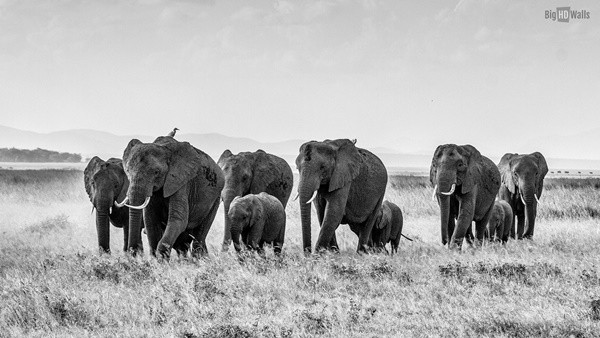 40 Outstanding Pictures of African Elephants 21