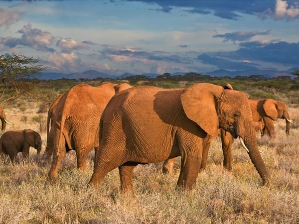 40 Outstanding Pictures of African Elephants 24