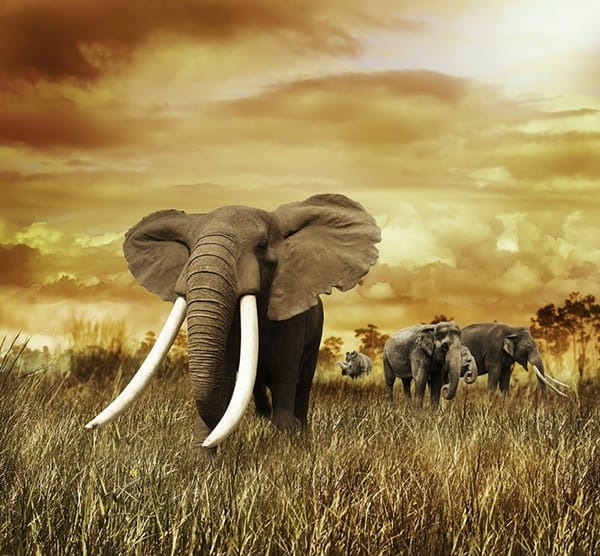 40 Outstanding Pictures of African Elephants 25