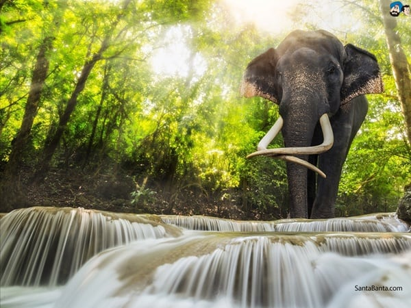 40 Outstanding Pictures of African Elephants 34