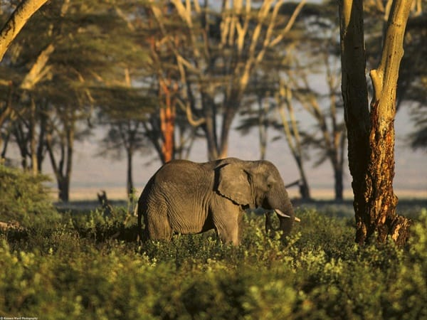 40 Outstanding Pictures of African Elephants 37