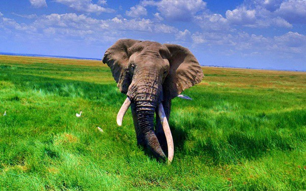 40 Outstanding Pictures of African Elephants 7