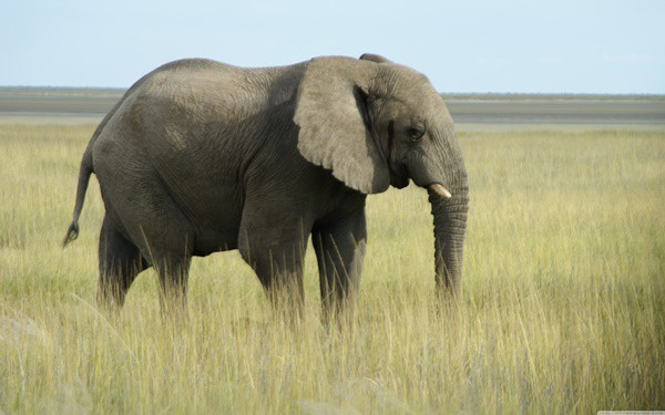 40 Outstanding Pictures of African Elephants 9