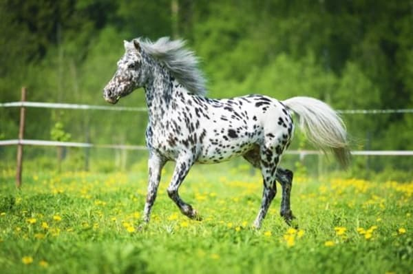 10 Best Horse Breeds List 6