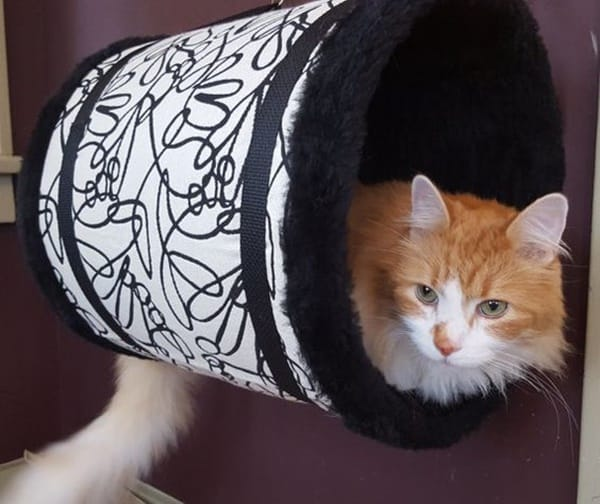 10 Cool Hanging Cat Perch Ideas 5