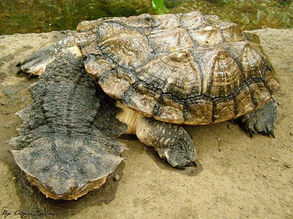 10 Weird and Wonderful Turtle and Tortoise Species 1