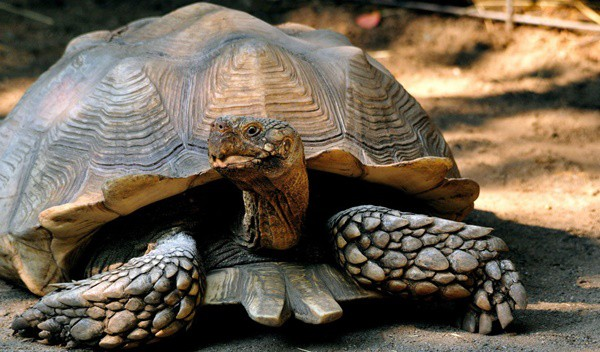 10 Weird and Wonderful Turtle and Tortoise Species 7