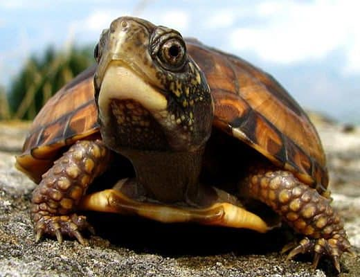10 Weird and Wonderful Turtle and Tortoise Species Feature Image