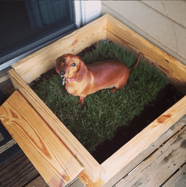 20 Cheap And Indoor Dog Bathroom Area Ideas Tail And Fur