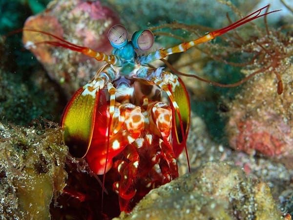 30 Pictures of Sea Animal with their Amazing Color Effect 26
