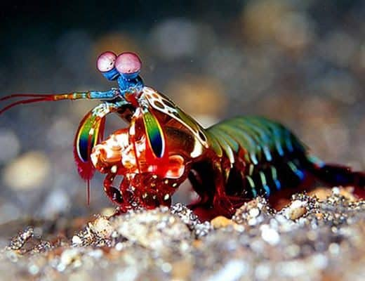 30 Pictures of Sea Animal with their Amazing Color Effect Feature Image