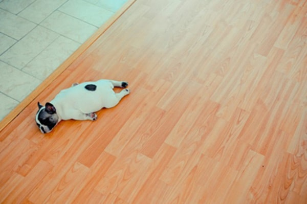 40 Adorable and Cute Pictures of Dog Planking 18