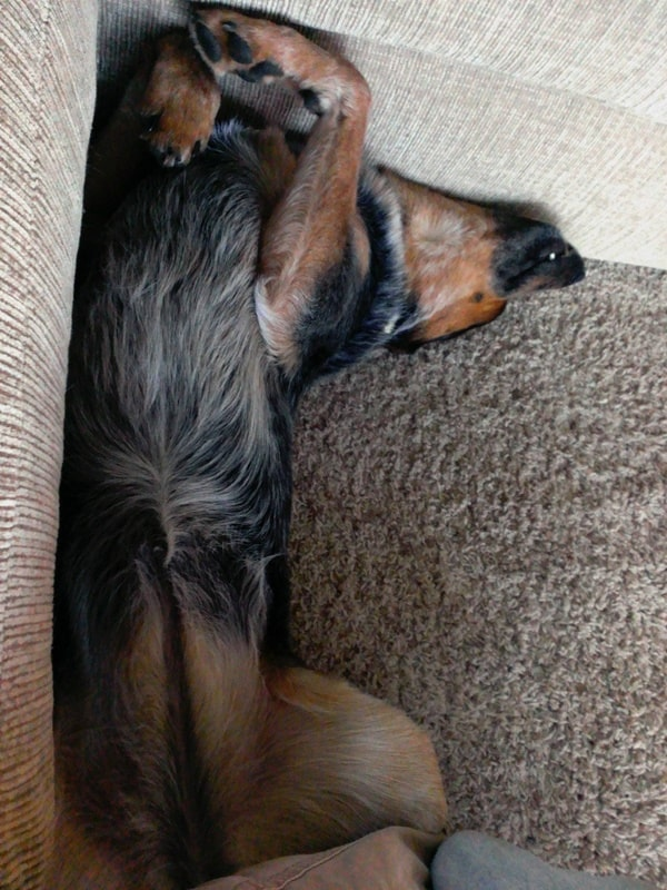 40 Adorable and Cute Pictures of Dog Planking 26