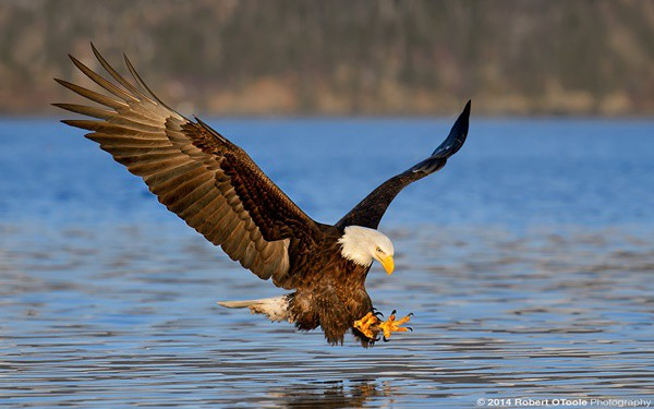40 Immoral and Powerful Pictures of Eagle 15