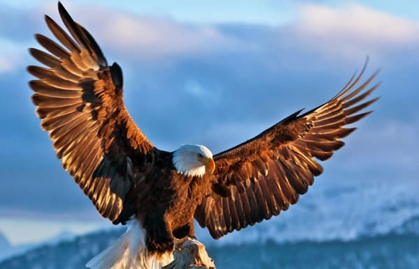 40 Immoral and Powerful Pictures of Eagle 17