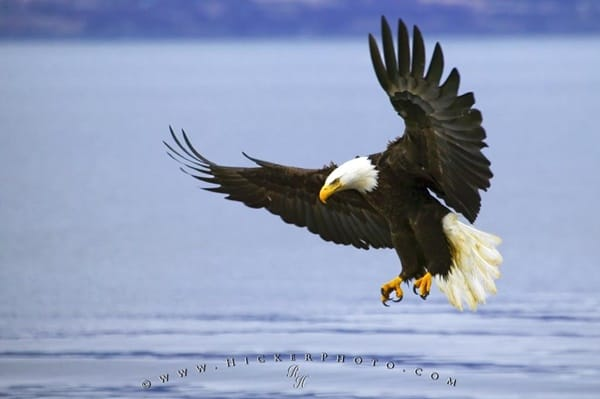 40 Immoral and Powerful Pictures of Eagle 18