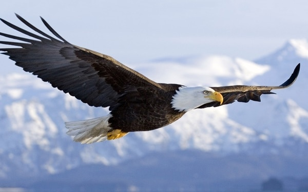 40 Immoral and Powerful Pictures of Eagle 3