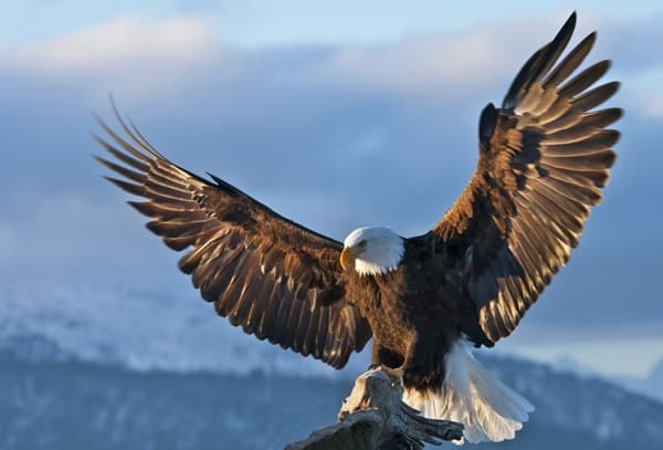 40 Immoral and Powerful Pictures of Eagle 6