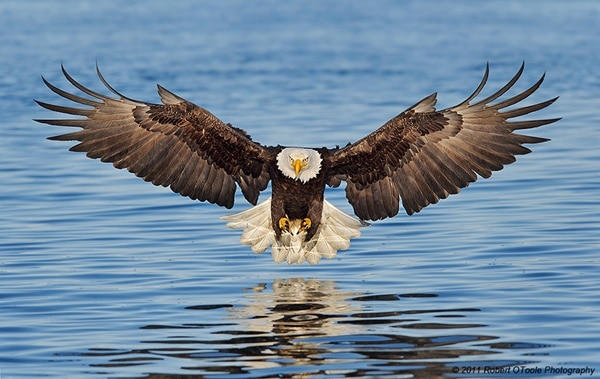 40 Immoral and Powerful Pictures of Eagle 8