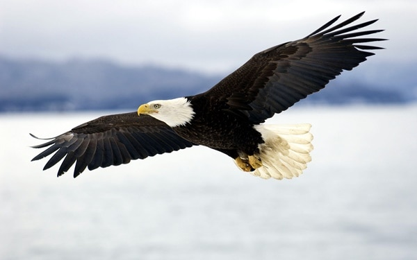 40 Immoral and Powerful Pictures of Eagle 9