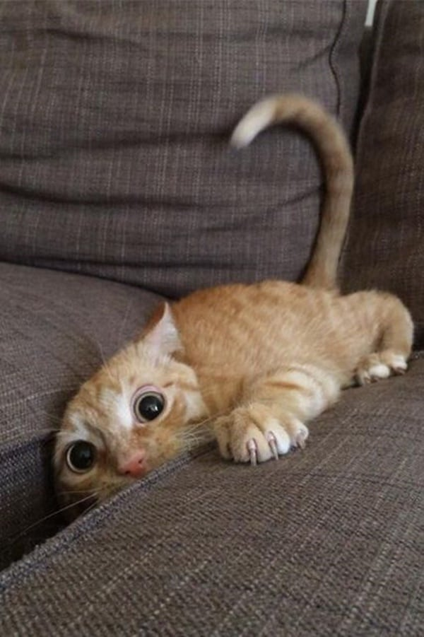 40 Pictures of Cats doing Funny Things 2