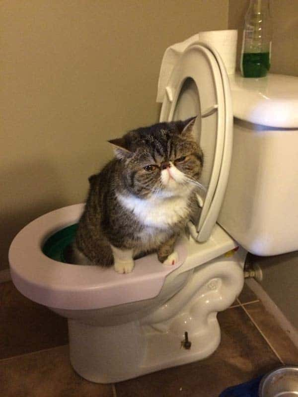 40 Pictures of Cats doing Funny Things 20