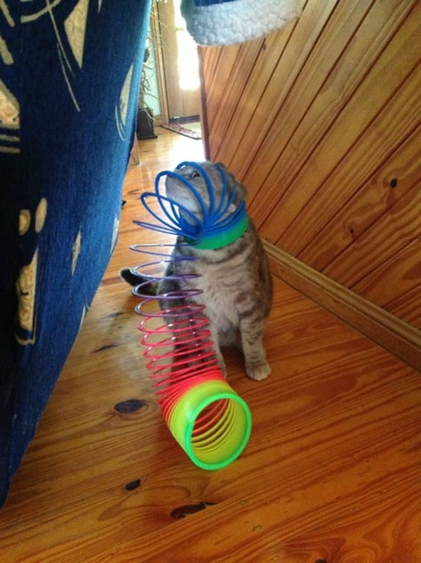 40 Pictures of Cats doing Funny Things 31