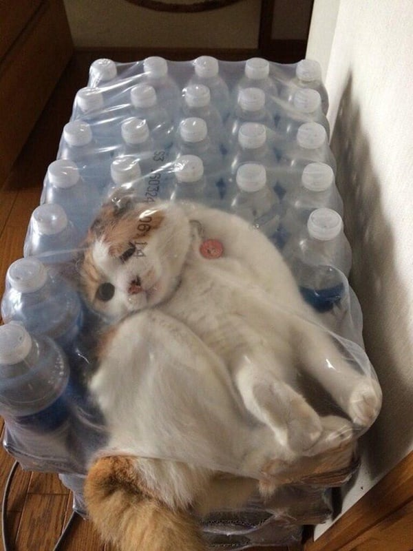 40 Pictures of Cats doing Funny Things 4
