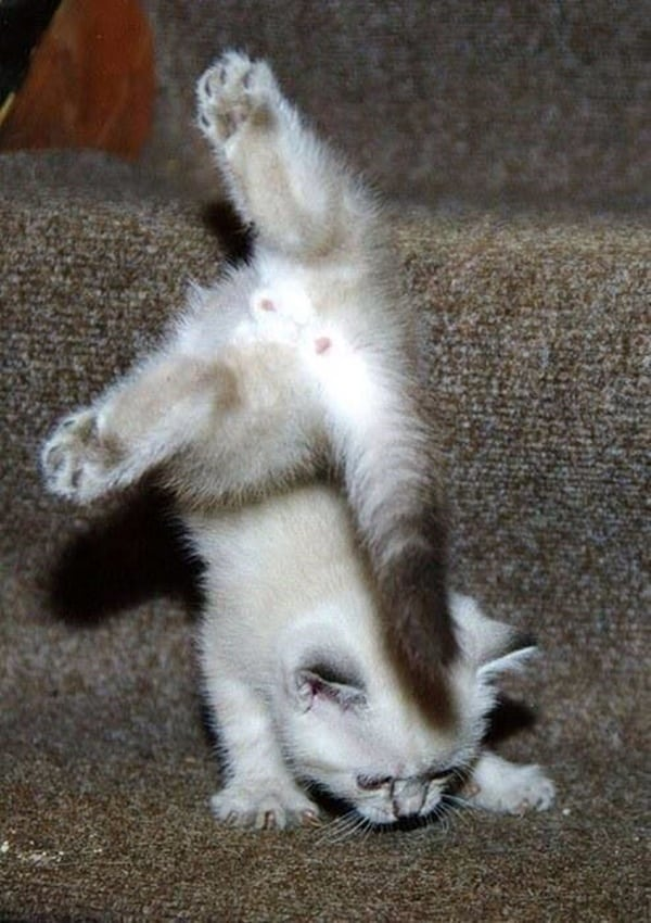 40 Pictures of Cats doing Funny Things 7