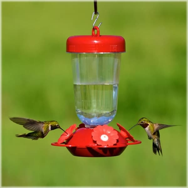How to Attract Hummingbird to your Garden 6