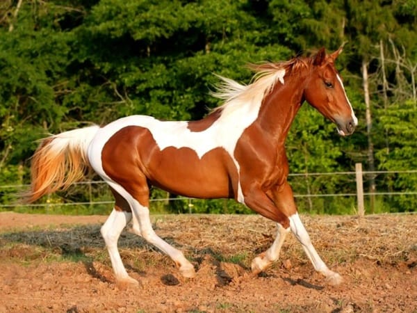 10 Best Horse Breeds List 9