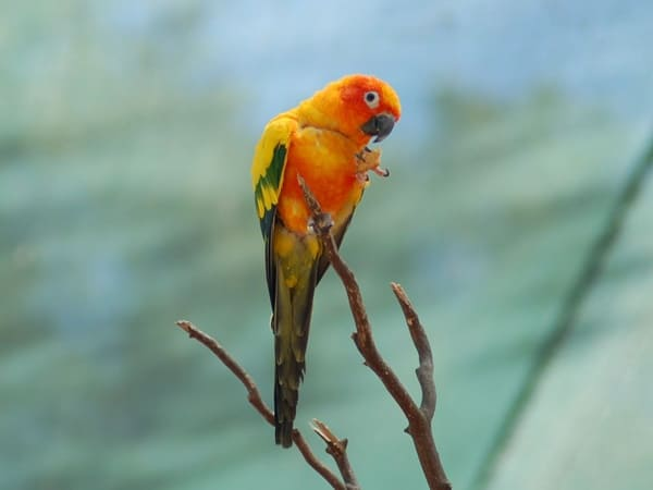 10-most-beautiful-parrot-species-in-the-world-10