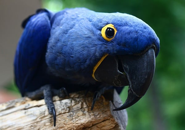 10-most-beautiful-parrot-species-in-the-world-6