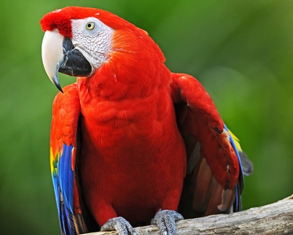 10-most-beautiful-parrot-species-in-the-world-7