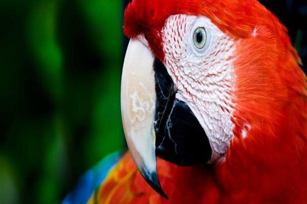 10-most-beautiful-parrot-species-in-the-world-feature-image