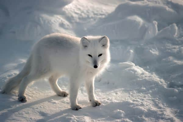 110-most-beautiful-fox-species-in-the-world-feature-image