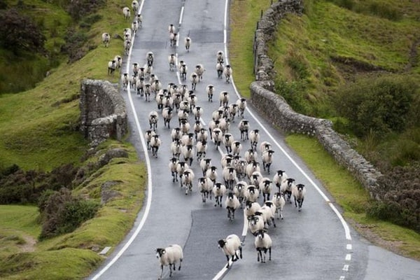 40 Breathtaking Pictures of Roads Full of Animals 16