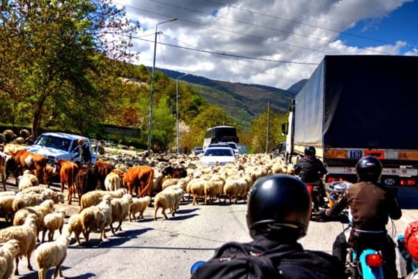 40 Breathtaking Pictures of Roads Full of Animals 17