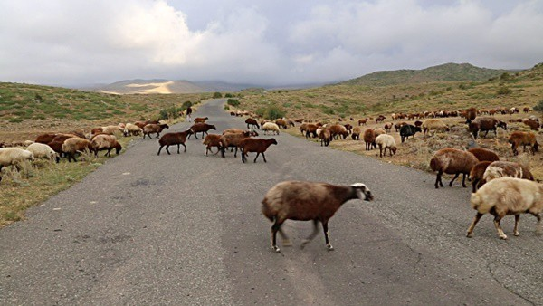 40 Breathtaking Pictures of Roads Full of Animals 4