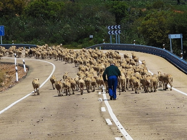 40 Breathtaking Pictures of Roads Full of Animals 6
