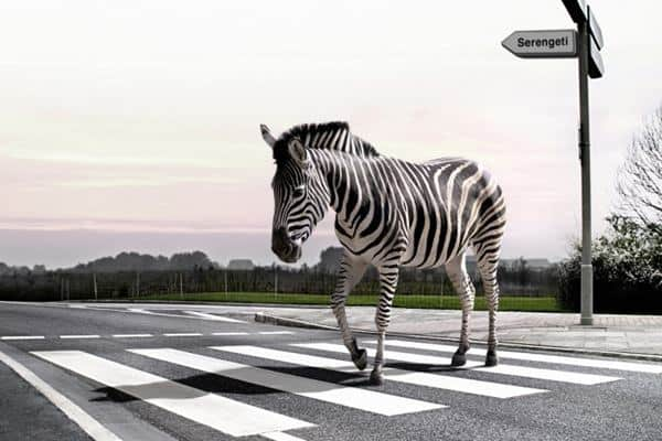 40 Breathtaking Pictures of Roads Full of Animals Feature Image