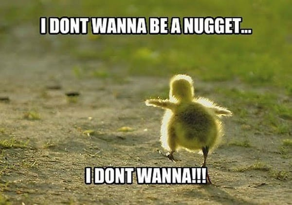 40 Funny and Cute Ideas Of Chicken Pictures 37