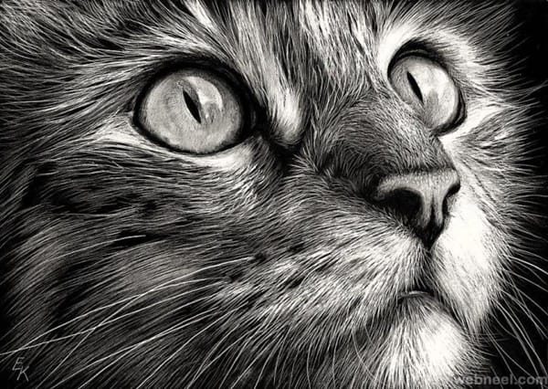 40 Great Examples of Cute and Majestic Cat Drawings 1