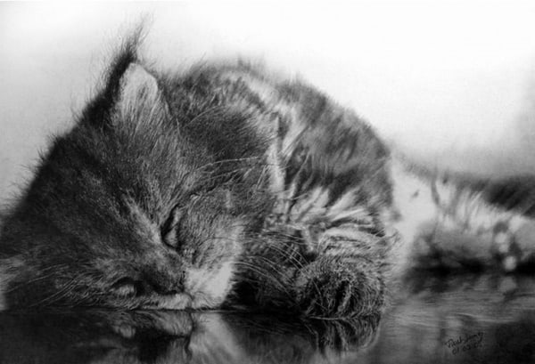 40 Great Examples of Cute and Majestic Cat Drawings 12