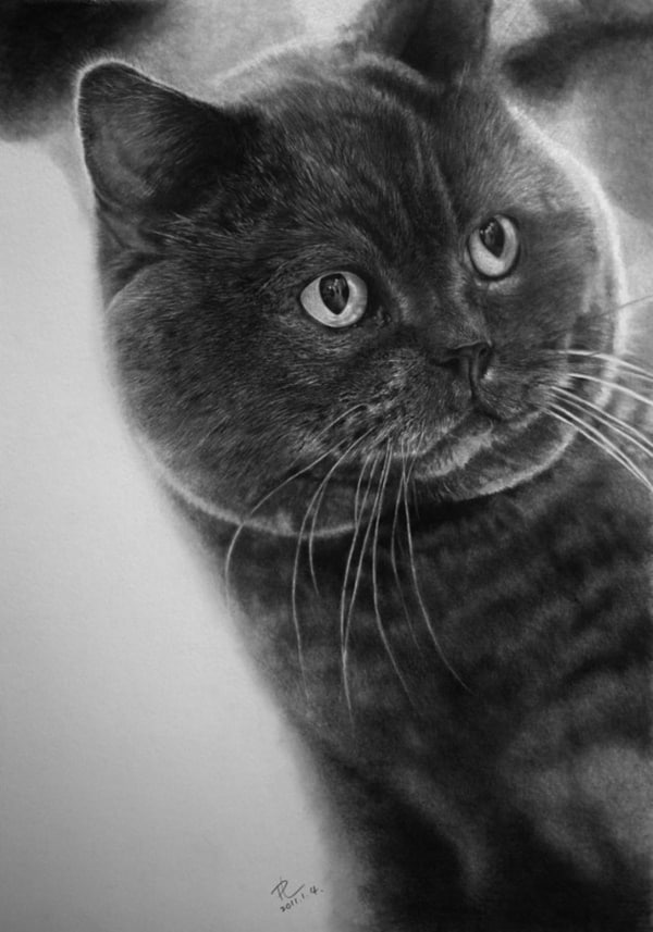 40 Great Examples of Cute and Majestic Cat Drawings 19